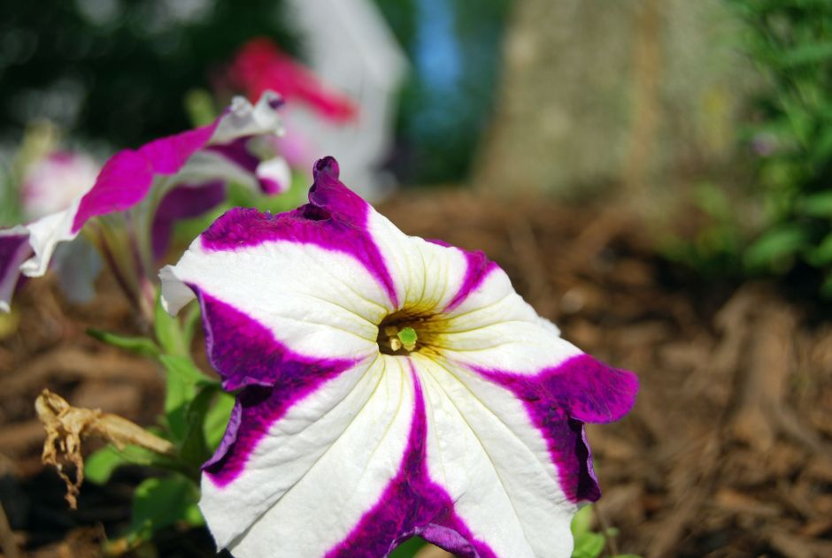flowers_034